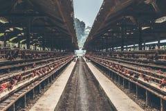 Chickens in the cage on chicken farm. Chicken eggs farm.