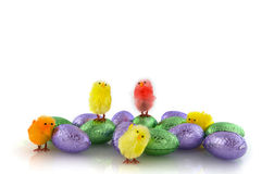 Chickens and chocolate eggs Royalty Free Stock Photo