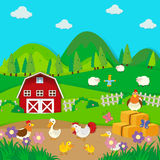Chickens and ducks on the farm Stock Images