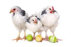 Chickens and easter eggs royalty free stock images