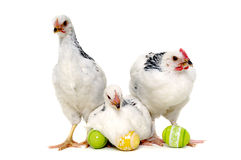 Chickens and easter eggs. Chickens with easter eggs. Isolated on a white background Royalty Free Stock Images