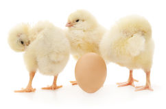 Chickens and egg Royalty Free Stock Photos
