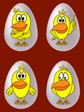 Chickens in eggs Stock Images