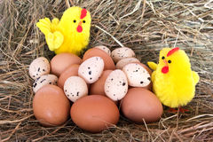 Chickens, eggs and hay Royalty Free Stock Photography