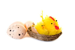 Chickens and eggs on white Stock Photo