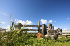 Chickens on a farm in summer Royalty Free Stock Photography