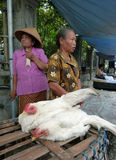 Chickens. Farmers sell chickens at the edge of the village road in Sukoharjo, Central Java, Indonesia royalty free stock photos