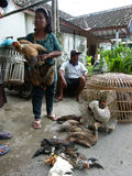 Chickens. Farmers sell chickens at the edge of the village road in Sukoharjo, Central Java, Indonesia royalty free stock images