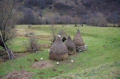 Chickens feeding in rural Romania royalty free stock photos