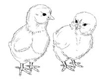 Chickens. A freehand drawing. Stock Photography