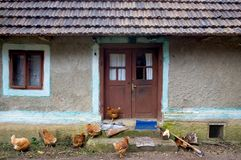 Chickens in front of house. A bunch of chickens in front of a house stock images