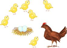 Chickens. Hen and brood of chickens vector illustration
