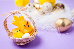 Chickens near the nest and basket with chickens on purpel background, easter Stock Photo