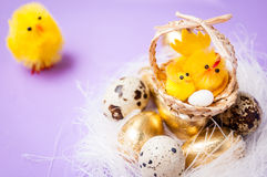 Chickens near the nest and basket with chickens on purpel background, easter Stock Image