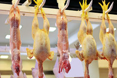 Chickens on processing line. Freshly slaughtered chicken on a processing line Royalty Free Stock Photo