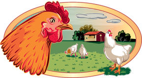 Chickens that roam free in a meadow. Stock Image