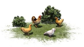 Chickens and rooster in grass and bushes Stock Images