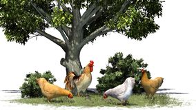 Chickens and rooster in grass , bushes and tree Royalty Free Stock Images