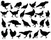 Chickens and roosters, silhouettes vector Stock Photo