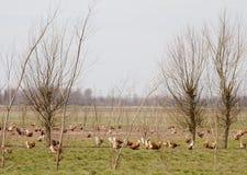 Chickens running Stock Photo