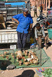 Chickens for sale in Morocco market Royalty Free Stock Photos
