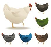 Chickens set vector illustration in Color. Brown, white, green, blue. royalty free illustration