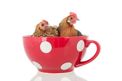 Chickens in soup bowl Stock Images