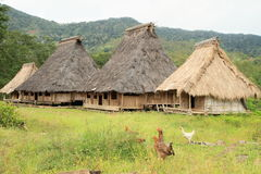 Chickens by traditional houses in open-air museum in Wologai Royalty Free Stock Image