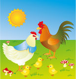 Chickens. Turkey hen with three chicks Stock Photos