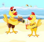 Chickens on vacation Royalty Free Stock Photo