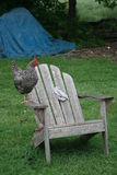 Chickens on chair Stock Images