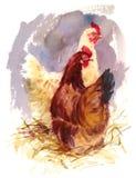 Chickens Watercolor Bird Illustration Hand Painted. Hand painted Watercolor illustration of two chickens vector illustration