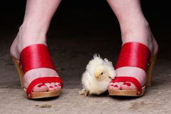 Chickie and clogs Stock Photography