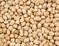 Chickpea texture Royalty Free Stock Images