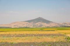 Chickpea uprawia ziemię w Wiejskim Etiopia, Suszy krajobraz obraz royalty free