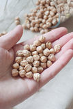 Chickpea in woman hand close up. In glass bottle on linen fabric and white wooden background Stock Photo