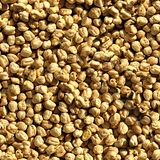Chickpeas. Seamless Texture Tile from Photographic Original Stock Photography