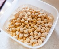 Chickpeas left in water to soak Royalty Free Stock Photos