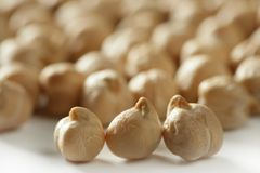 Chickpeas texture at studio Royalty Free Stock Image