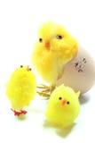 Chicks Royalty Free Stock Photos