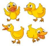 Chicks vector illustration