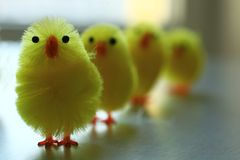 Chicks army Stock Photo