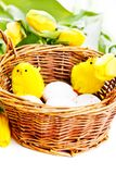 Chicks in basket Royalty Free Stock Photo