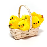 Chicks in a Basket Royalty Free Stock Photo