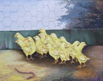 Chicks in a chicken coop look strangely at an earthworm royalty free stock image