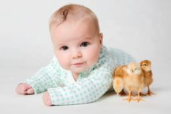 Chicks and a cute little newborn baby. Stock Photos