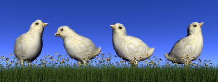 Chicks - 3D render Royalty Free Stock Photography