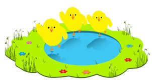 Chicks are dancing Royalty Free Stock Images