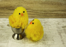 Chicks, Easter decoration on a wooden countertop Royalty Free Stock Images