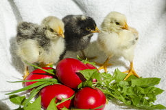 Chicks and easter eggs Royalty Free Stock Image